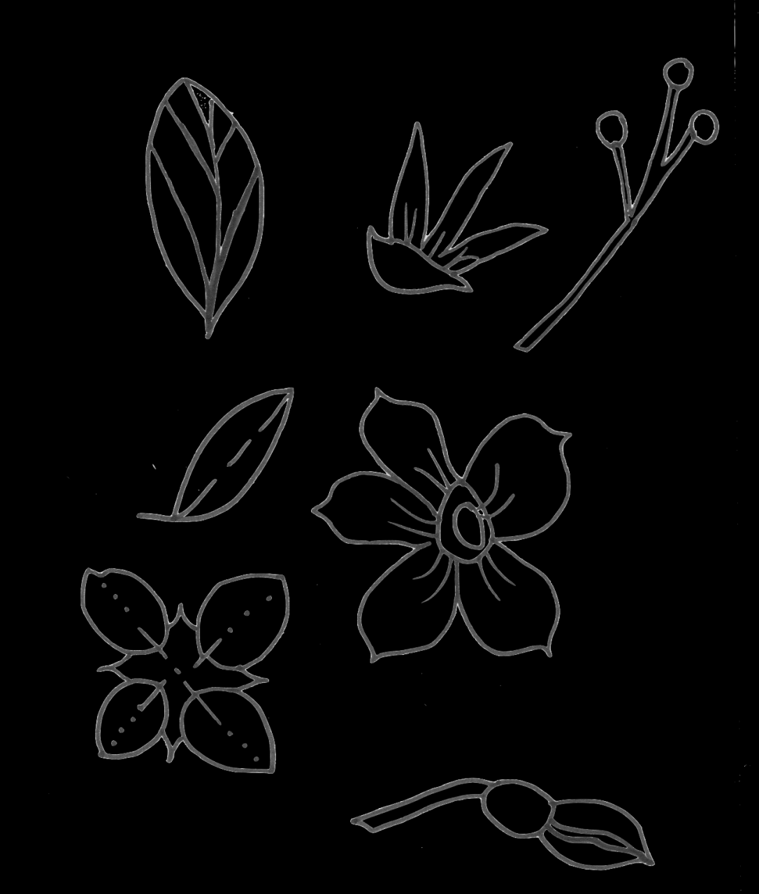 flower doodles.png