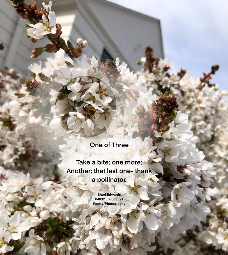 abuzz in pollinators